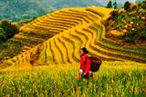 3 Days Guilin Longsheng Rice Terrace Panorama Hiking from Dazhai Via Zhonglv To Pingan