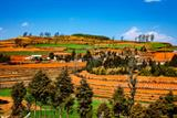 12 Days Yunnan Photography Tour to Kunming, Dongchuan Red Land, Luoping, Stone Forest, Yuanyang Terrace and Jianshui