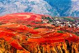 7 Days Colorful Yunnan Tour to Kunming Dongchuan Red Land, Lijiang and Shangri-la